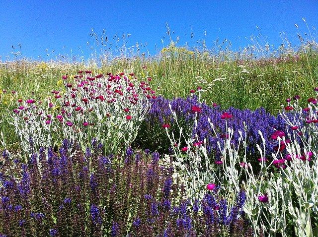 barevné květiny v zahradě