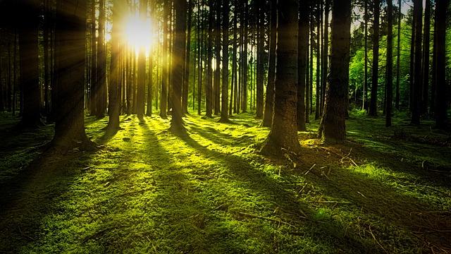 mechový les
