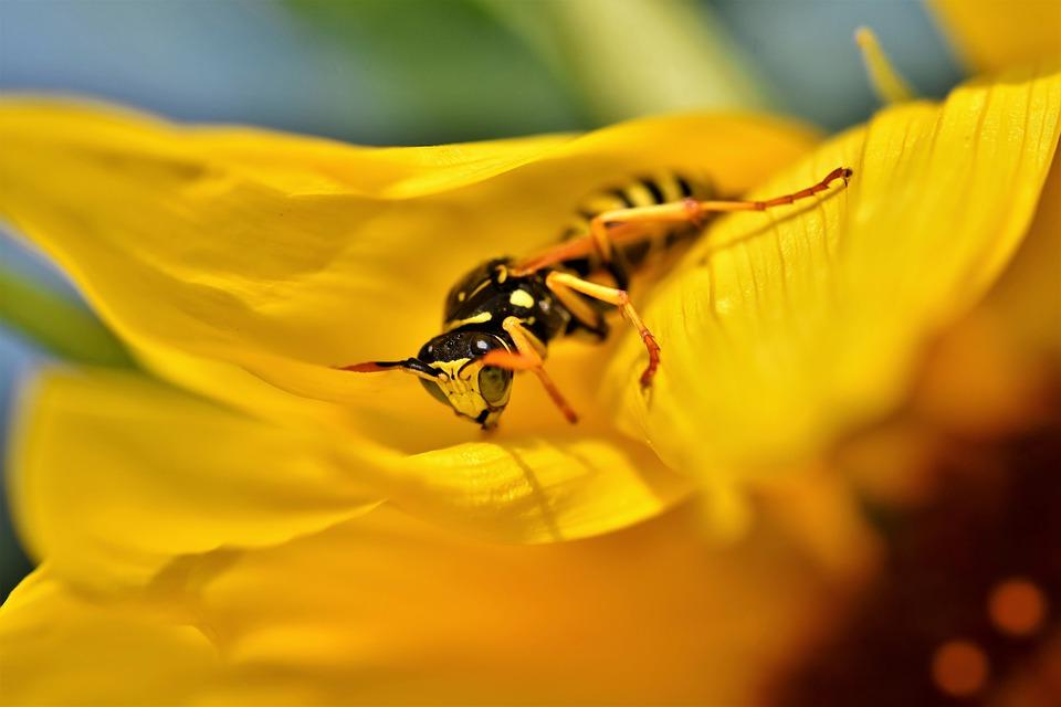 vosa na květině
